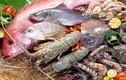 Những lưu ý khi cho trẻ ăn dặm đồ hải sản
