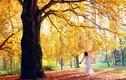 Phương pháp đẩy lùi nỗi buồn chán trong mùa thu