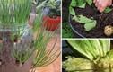 8 loại rau củ trồng 1 lần, mọc đi mọc lại vĩnh viễn