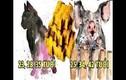 """Video: Dự đoán """"không trật 1 ly"""" độ tuổi thành công của 12 con giáp"""