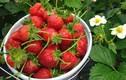 Những loại trái cây nên ăn vào buổi tối để da đẹp dáng xinh