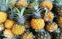 Thực phẩm tự nhiên giúp tiêu diệt giun sán tận gốc, không cần dùng thuốc
