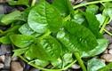Bạn đã biết cách dưỡng trắng da bằng rau mồng tơi chưa?