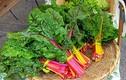 10 loại rau củ quả nhất định bạn phải ăn mùa thu này