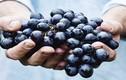 Đang dịch COVID-19, bệnh nhân tiểu đường chớ dại ăn 10 loại trái cây này