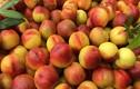 3 loại trái cây mùa hè bị xử lý hóa học nhiều nhất, chớ dại ăn!