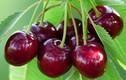 4 loại quả không được ăn tùy tiện kẻo rước họa vào thân