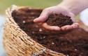 4 nguyên liệu nhà bếp tưới hoa tốt hơn phân bón
