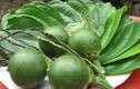 Loại trái cây dễ gây ung thư, nhiều người ăn không biết