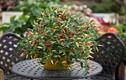Những loại cây gia vị nên trồng trong gian bếp, cần là có ngay