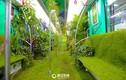 Ngắm tàu điện ngầm phủ cây xanh mát mắt ở Trung Quốc