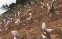 Vườn đào Nhật Tân thế nào sau Tết Nguyên đán?