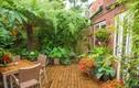 Ông lão 20 năm biến vườn nhà thành rừng nhiệt đới gây choáng