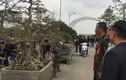 Mãn nhãn dàn cây cảnh thế độc đọ dáng ở Hà Nội