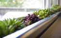 Những loại cây thích hợp trang trí cửa sổ nhỏ xinh