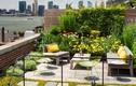 """""""Bỏ túi"""" tuyệt chiêu chăm sóc vườn trên mái luôn xanh tươi"""