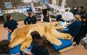 Xem người nhổ răng sâu cho chú gấu già nhất Bắc Mỹ