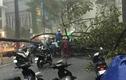 Mưa lớn nhiều giờ, cây ở TP.HCM đổ làm một người bị thương