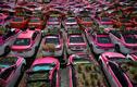 Hàng trăm xe taxi ở Thái Lan biến thành vườn rau vì COVID-19