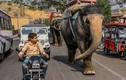 Ấn Độ đề xuất thay còi ôtô, xe máy bằng tiếng sáo và đàn