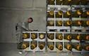 Quân đội Nga cấp tốc diễn tập phá hủy vũ khí hạt nhân của Mỹ