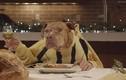 Cười té ghế xem chó ăn như người