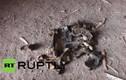 Ukraine nhặt được thi thể nạn nhân MH17 trong những mảnh vỡ