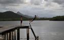 Kinh ngạc cuộc sống ở hòn đảo hoang sơ nhất thế giới