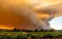 Cháy rừng ở California: Lính cứu hỏa bị...trộm ví khi đang dập lửa