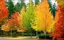 Vì sao lá cây thay đổi màu sắc vào mùa thu?