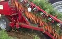 Choáng ngợp trước máy thu hoạch cà rốt siêu chuyên nghiệp