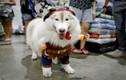 Video: 4 cách tái chế đồ cũ thành áo cho cún yêu