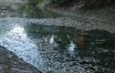 Ghê người nhìn cá chết trắng nổi kín mặt hồ Thiền Quang