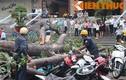 TP HCM: Hàng loạt cây bật gốc, đè bẹp 100 xe máy