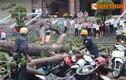 Vụ cây đổ đè 100 xe máy: thiệt hại hơn 1 tỉ đồng