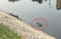 Hà Nội: Phát hiện xác chết nổi trên sông Tô Lịch