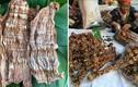 Sợ thực phẩm bẩn, dân thành phố săn sản vật rừng đón tết