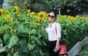 Thiếu nữ Hà thành háo hức chụp hoa hướng dương ở thành Thăng Long