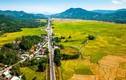 Dân phơi lúa tràn lan trên quốc lộ 1