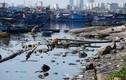 Âu thuyền lớn nhất Đà Nẵng bị rác thải bủa vây