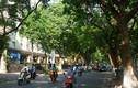 Bất chấp nắng nóng, những con đường Thủ đô này vẫn mát như điều hòa