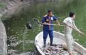 Hà Nội: Cá chết hàng loạt dạt vào bờ ở hồ Tây