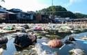 Kinh hoàng rác khắp bờ biển Việt Nam