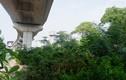 """Rác thải, cỏ dại mọc ùm tùm """"nuốt trọn"""" dự án thập kỷ đường sắt Cát Linh - Hà Đông"""