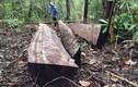 Làm rõ vụ phá rừng quy mô lớn ở 2 lâm phần tại Gia Lai