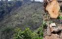 """Lạng Sơn: Rừng đầu nguồn bị """"cạo trọc"""", chính quyền nói để trồng rừng?"""