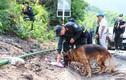 Bác tin chó nghiệp vụ hy sinh khi truy tìm quân nhân trốn trại