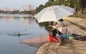 Hồ Định Công biến thành hồ câu dịch vụ: Chủ tịch phường phải chịu trách nhiệm