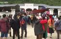 Hà Giang: Xuất hiện 62 ổ dịch bệnh viêm da nổi cục trên đàn gia súc