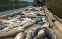Xả thải gây ô nhiễm sông Bưởi: Sẽ khởi tố hình sự